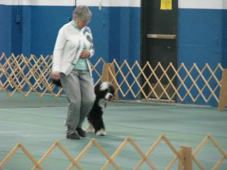 Portuguese Water Dog Popeye heeling with owner Susan Forman at LPDTC Obedience Trials, 2012
