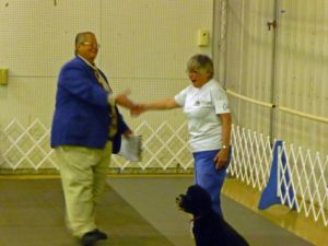 Portuguese Water Dog Molly Brown Qualifies in Utility A for another UD Leg