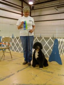 Portuguese Water Dog Molly Brown Takes First Prize in Utility A for another UD Leg