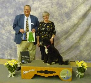 Portuguese Water Dog Molly Brown earns Utility Dog Title with Susan Forman and AKC Judge Larry Andrus
