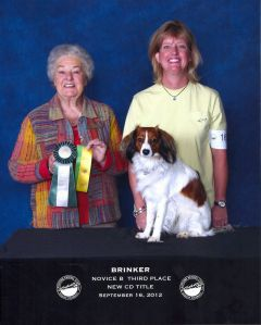 Brinker the Kooikerhondje earns CD Title