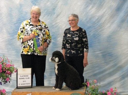 Susan Forman's Portuguese Water Dog Molly Brown wins Versatility Title